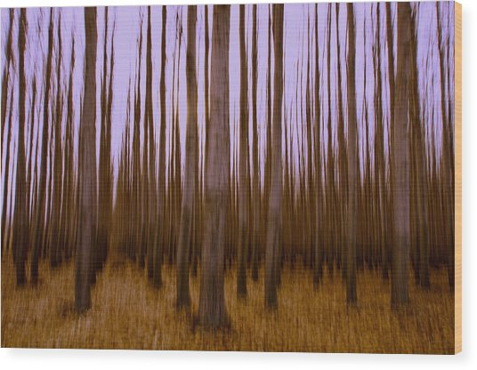 Forest Escape Wood Print