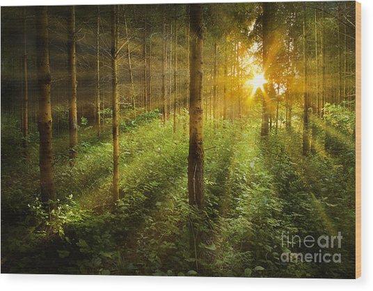Forest Fairytale Wood Print by Bernadett Pusztai