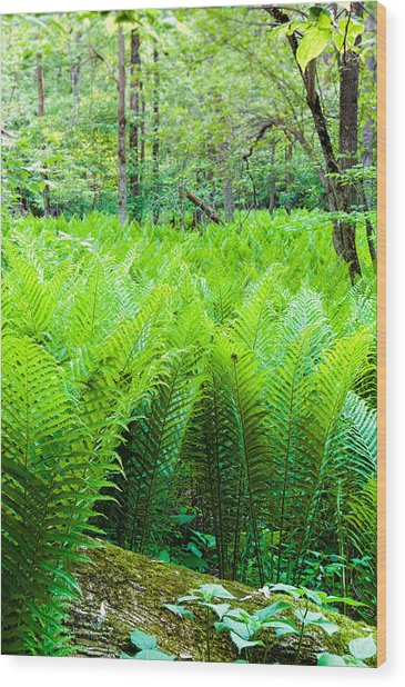 Forest Ferns   Wood Print