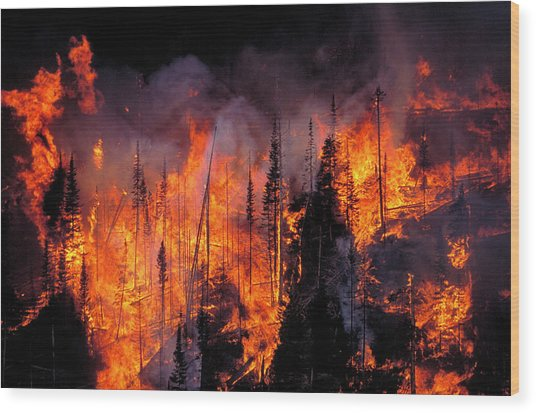 Forest Fire Wood Print by Kari Greer/science Photo Library