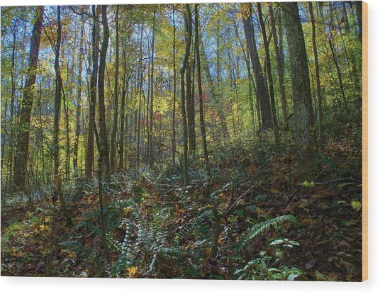Forest Floor Wood Print by Doug Hubbard