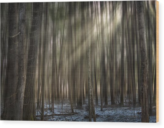 Forest Glow Wood Print