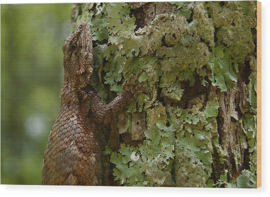 Forest Lizard 2 Wood Print
