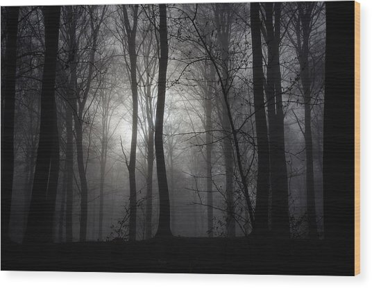Forest Mist Wood Print by Mark David