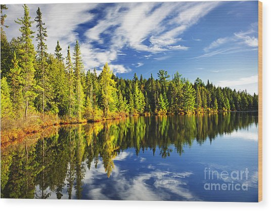 Forest Reflecting In Lake Wood Print