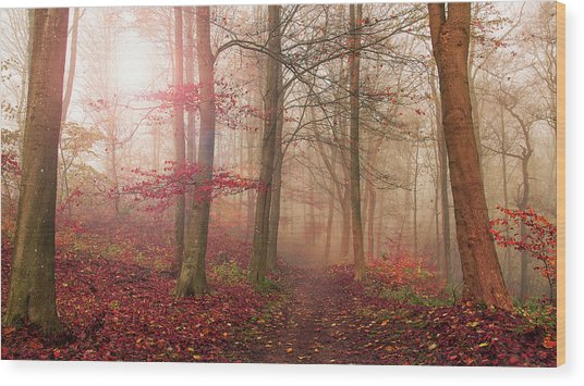 Forest Scene. Wood Print by Leif L??ndal