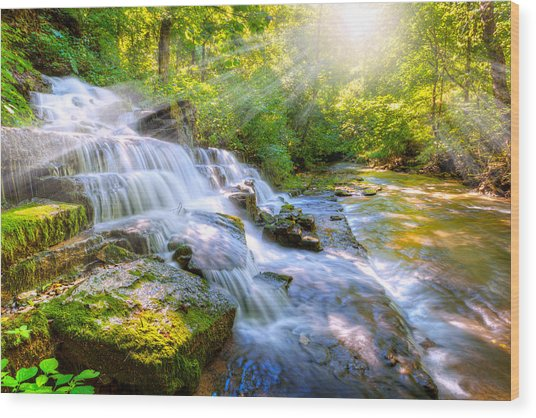 Forest Stream And Waterfall Wood Print