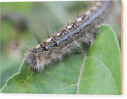 Forest Tent Caterpillar Wood Print