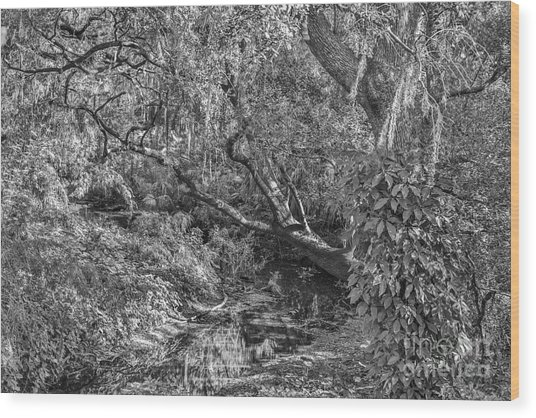 Forest View Wood Print by Mina Isaac