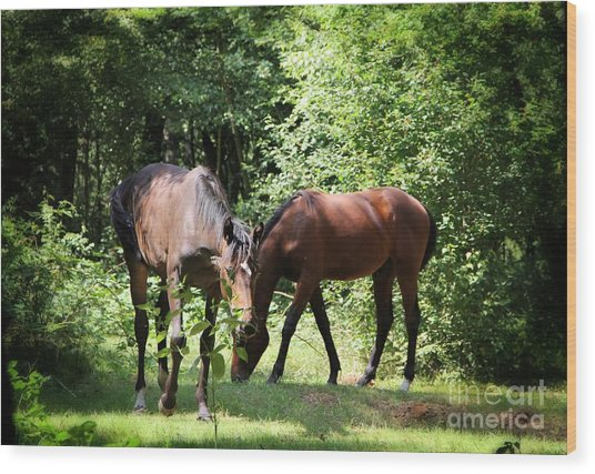Forest Visitors Wood Print