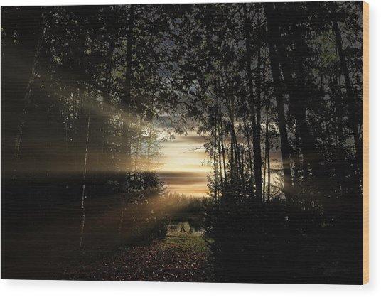 Forest Walkway Wood Print