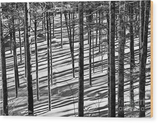 Forest's Shadows Wood Print