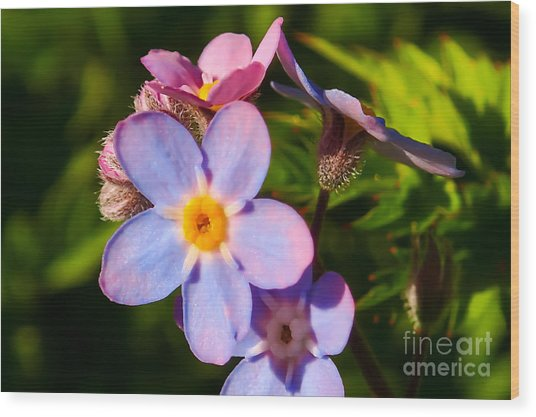Forget-me-knots Wood Print