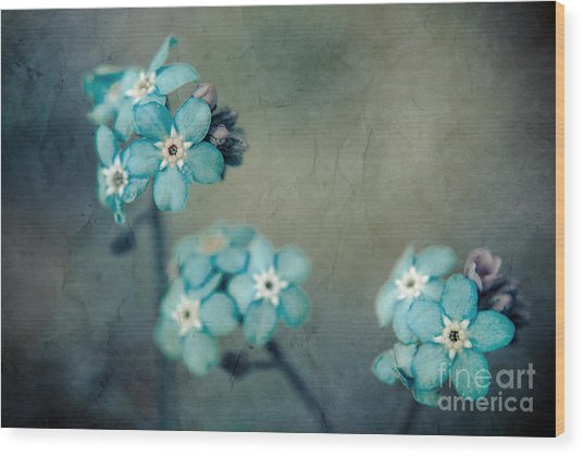 Forget Me Not 01 - S22dt06 Wood Print