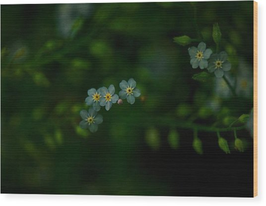 Forget  Me Not 4 Wood Print