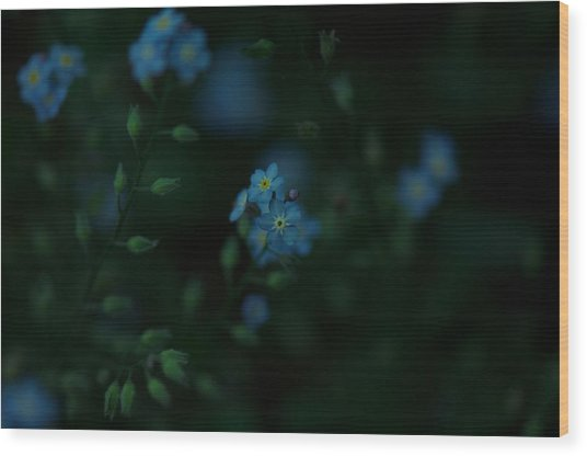 Forget Me Not 5 Wood Print