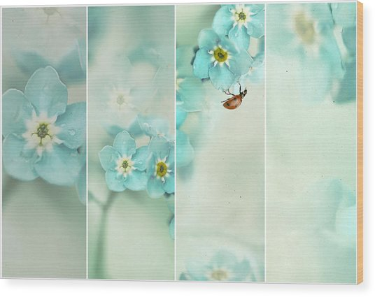 Forget Me Not..... Wood Print