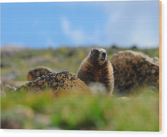 Fort Marmot Wood Print