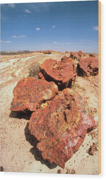 Fossilised Trees In Petrified Forest National Park Wood Print by Tony Craddock/science Photo Library