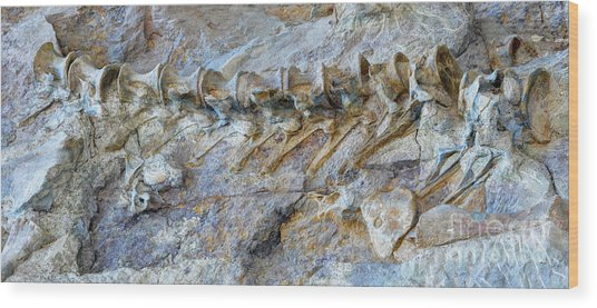 Fossilized Dinosaur Backbone - Dinosaur National National Monument Wood Print