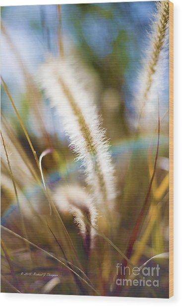 Fountain Grass Wood Print
