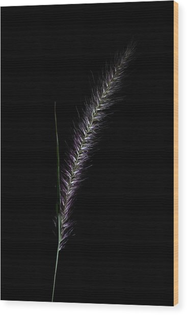 Fountain Grass Spike Wood Print
