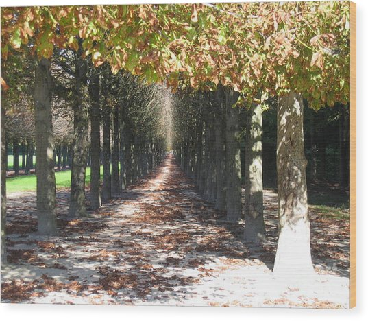 Fountainebleau - Under The Trees Wood Print