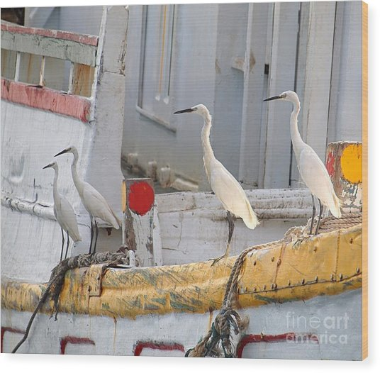 Four Egrets Watch For Fish Wood Print