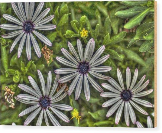 Four Flowers Wood Print