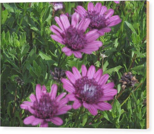 Four Purple Flowers Wood Print