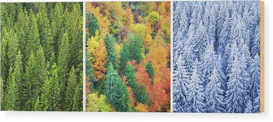 Four Season Forest Wood Print by Borchee
