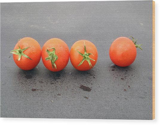 Four Tomatoes Wood Print