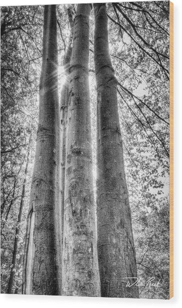 Four Trunks Wood Print by William Reek