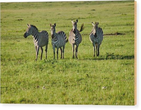 Four Zebras Wood Print