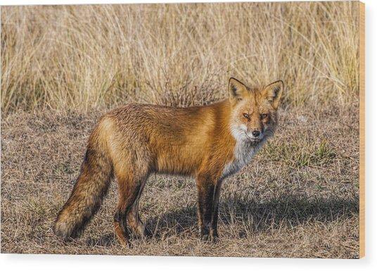 Fox 7282 Wood Print