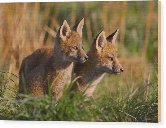 Fox Cubs At Sunrise Wood Print
