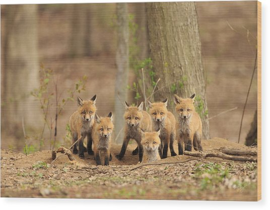 Fox Family Portrait Wood Print