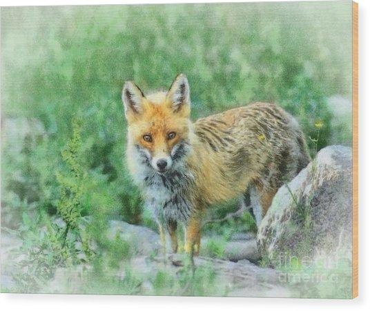 Fox In The Rocks Wood Print by Czesznak Zsolt