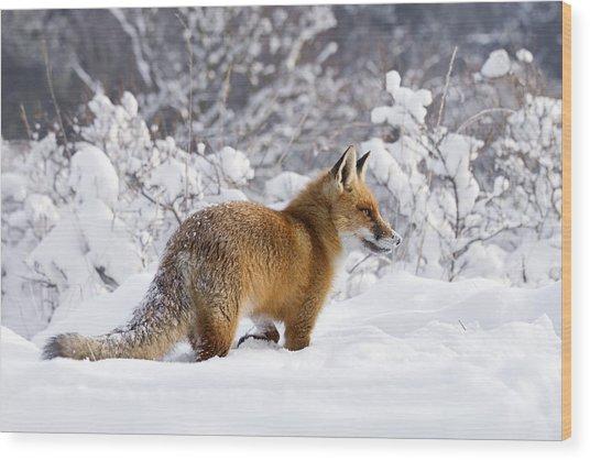 Fox In The Snow Wood Print