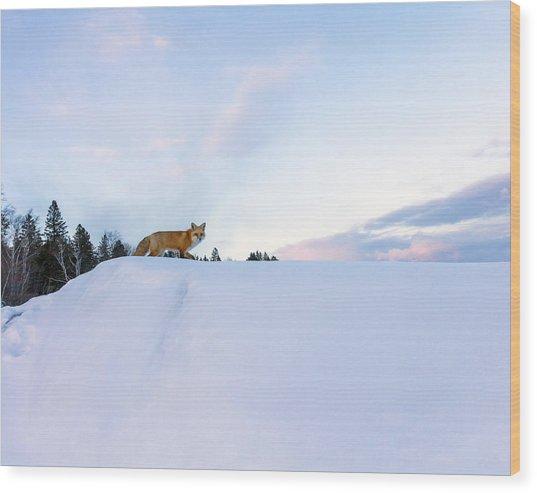 Fox Of The North IIi Wood Print
