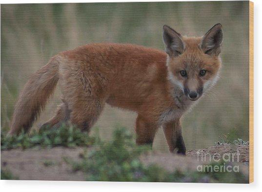 Fox Pup Wood Print