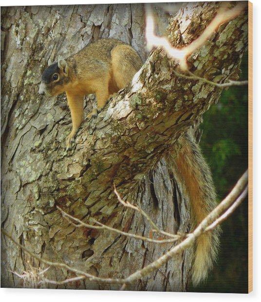 Fox Squirrel IIi Wood Print by Lynn Griffin