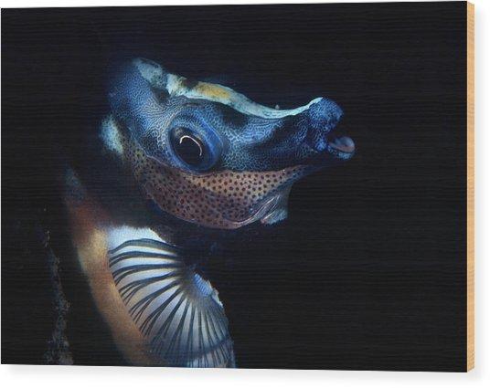 Foxface Rabbitfish Wood Print