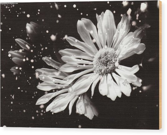 Fractured Daisy Wood Print