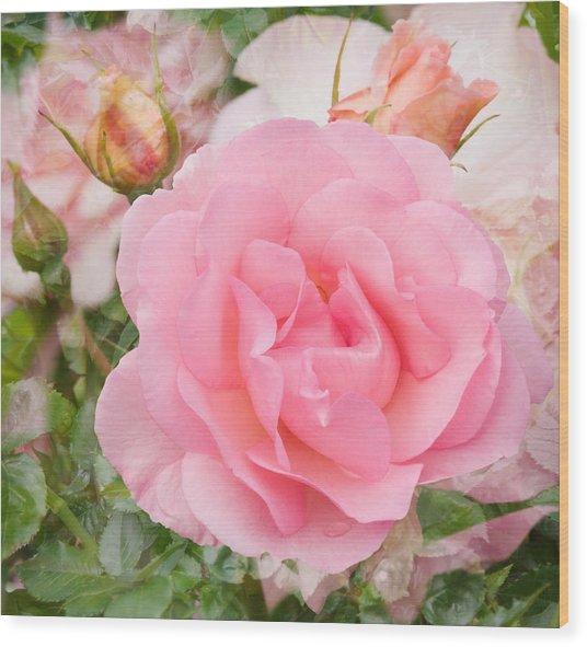 Fragrant Cloud Rose Wood Print