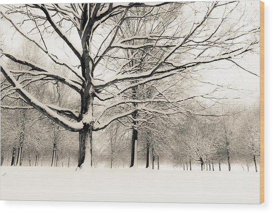 Francis Park In Snow Wood Print