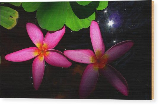 Frangipani Flowers On Water Wood Print