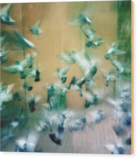 Frantic Wing Beats - Many Scared Pigeons Wood Print