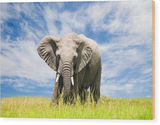 Free African Elephant Wood Print by 1001slide