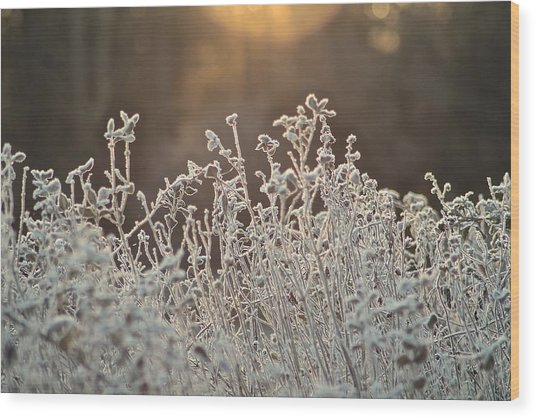 Freezing Cold Wood Print by Karen Grist